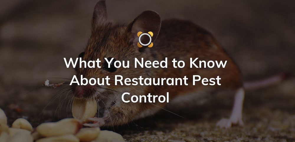 What You Need To Know About Restaurant Pest Control